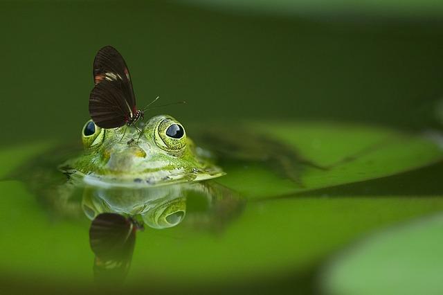 ¿Sufres el síndrome de la rana hervida?